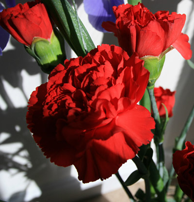 red_carnations